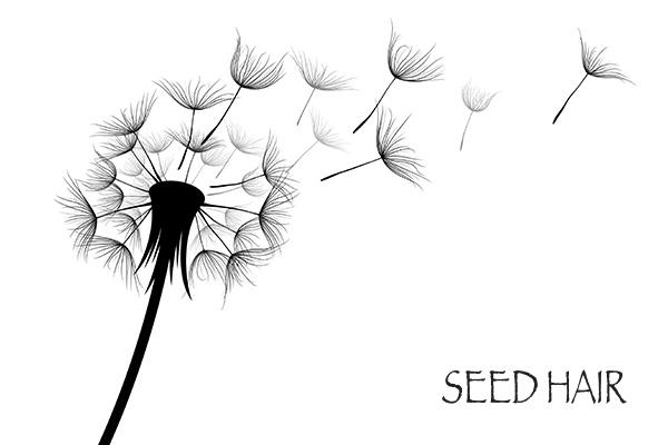 広島県三原で美容サロンをお探しならシードヘアー(SEED_HAIR)